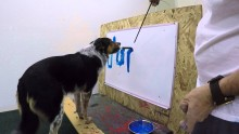 Give this dog a paint brush and watch what he does