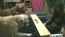 Perfect Pitch Dogs Play Piano