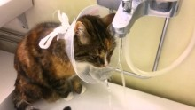 Smart Kitten Drinking From The Cone