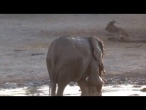 This adorable baby elephant didn't want to finish bath time