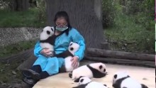 Panda Hugger – The World's Best Job