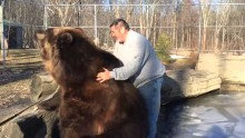 Playtime with a really big bear