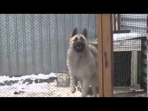 This Dog Dances Better Then You